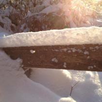 Vinter hos Vildrosor & Höns
