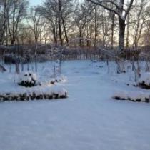 Vinter i trädgården Vildrosor & Höns